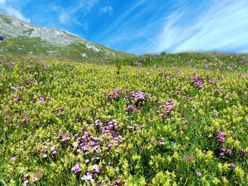 Альпийские травы