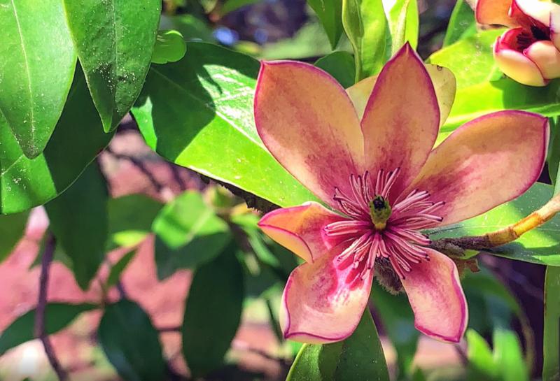 В саду вы увидите большое количество цветов