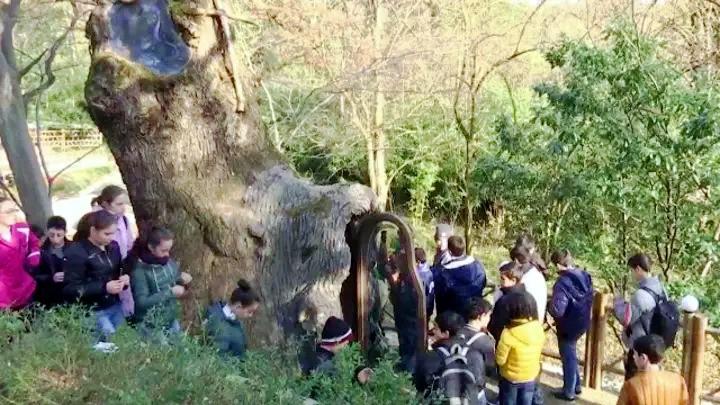 Часовня внутри 400-летнего дуба